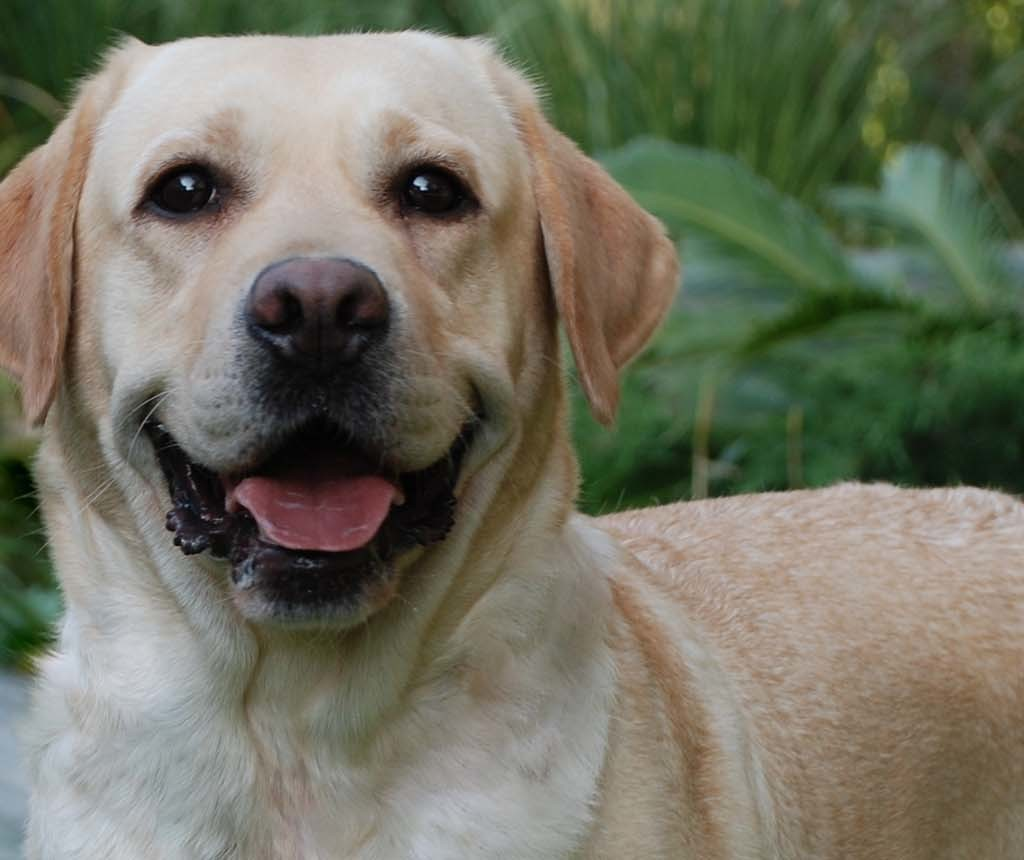 Lipari, donna salvata da un Labrador