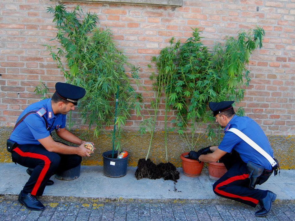 Castelmola (ME), coltivava marijuana accanto a pomodori e frutta, arrestato dai Carabinieri della Stazione di Taormina