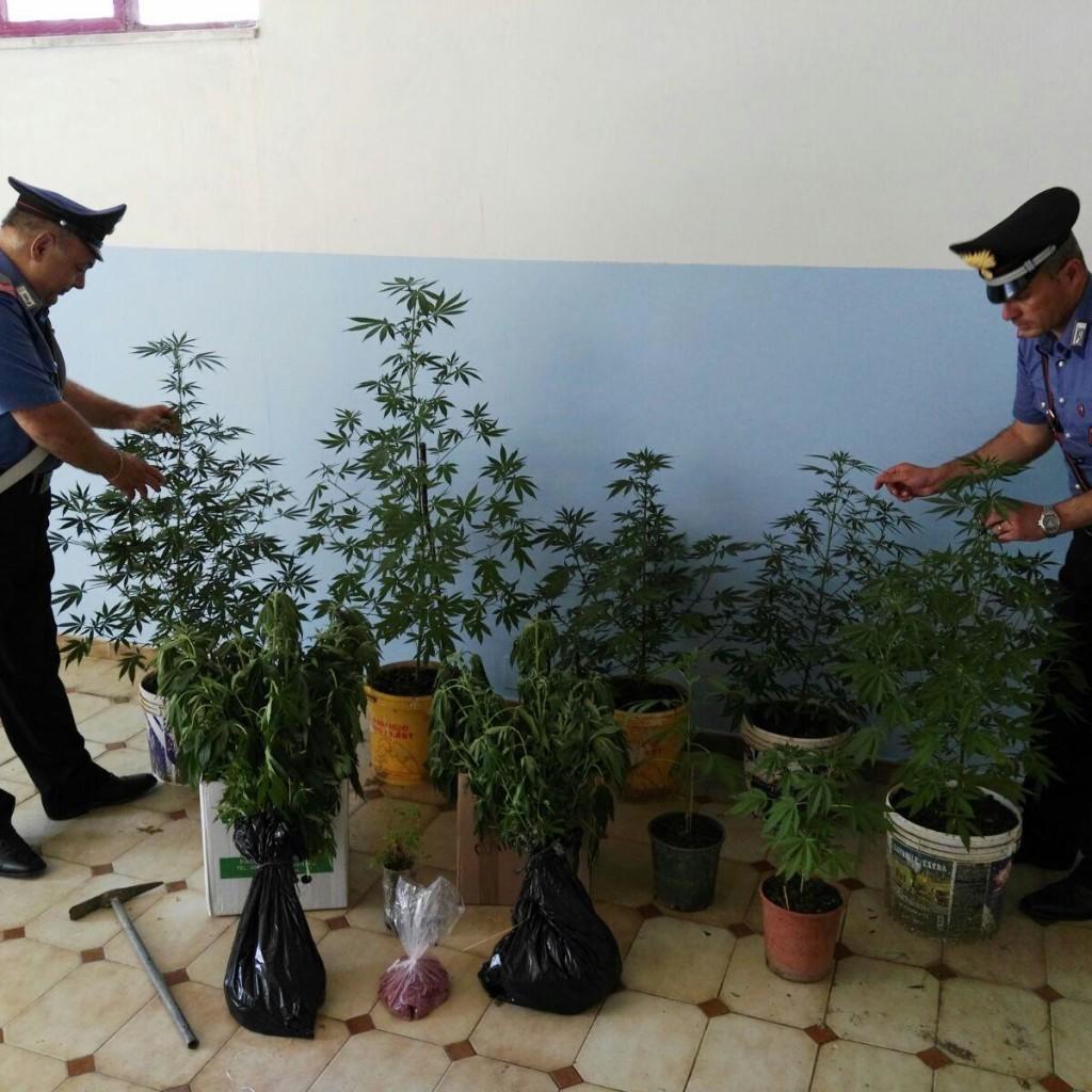Tortorici, coltivava stupefacente: arrestato dai Carabinieri