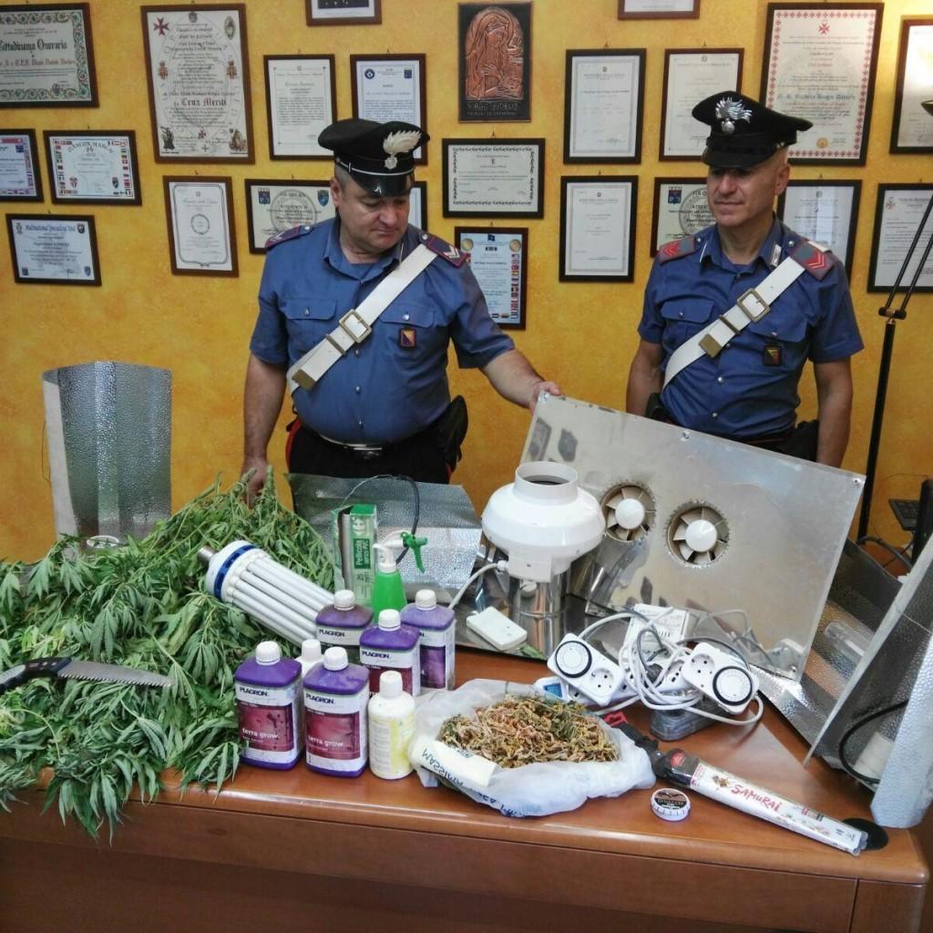 Messina: Scoperta un'altra piantagione di marijuana in provincia;  2 persone arrestate dai carabinieri