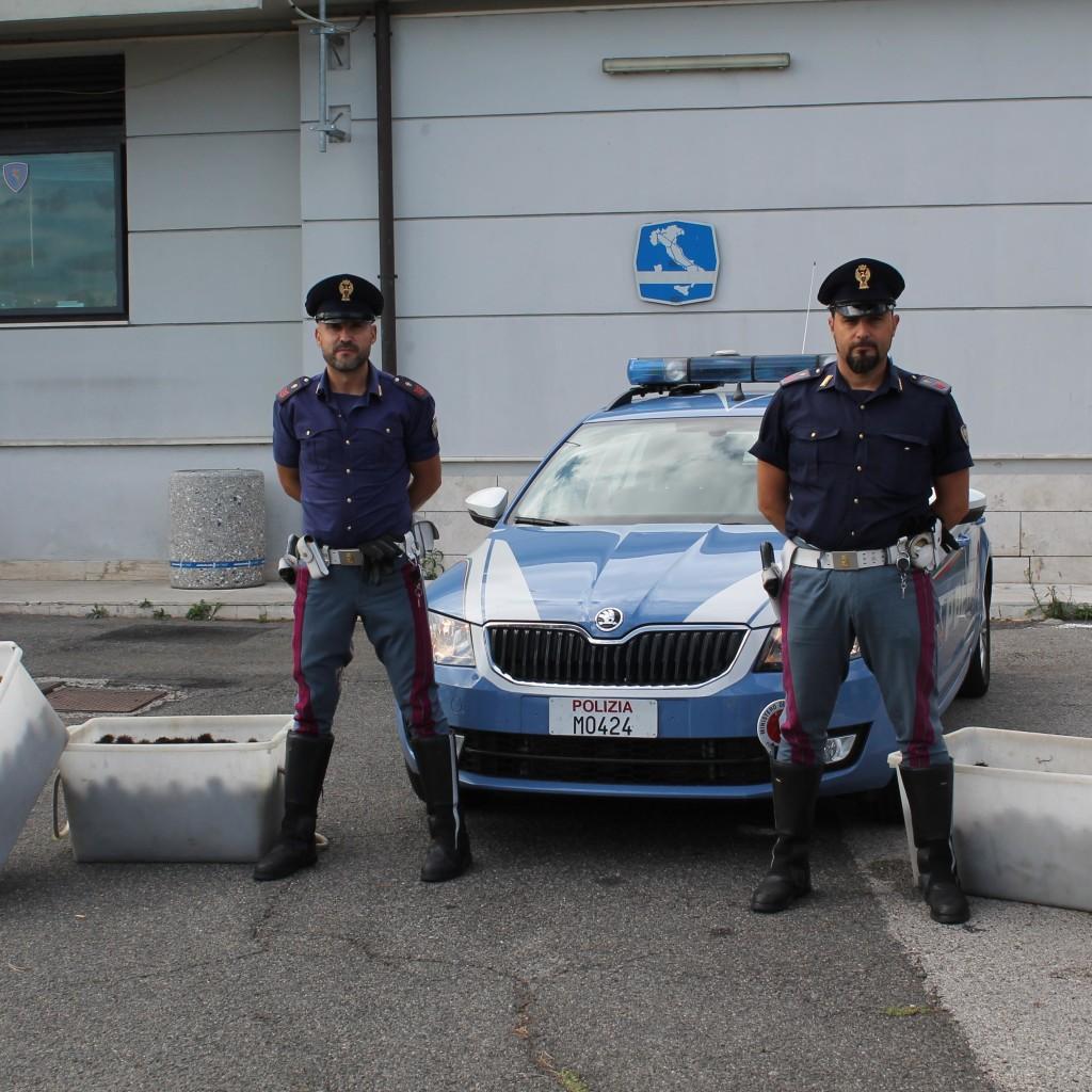 ROMA. LA POLIZIA DI STATO SULL'AUTOSTRADA DEL SOLE SEQUESTRA UN CARICO DI 80 CHILI DI RICCI DI MARE IN VIAGGIO VERSO LA PUGLIA