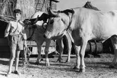 La storiella del contadino