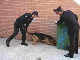 Piraino: arrestato dai Carabinieri per detenzione di droga