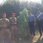 MESSINA: continuano i rastrellamenti dei Carabinieri nelle aree impervie del Capoluogo. Scoperta una piantagione di canapa indiana – arrestato un 23enne