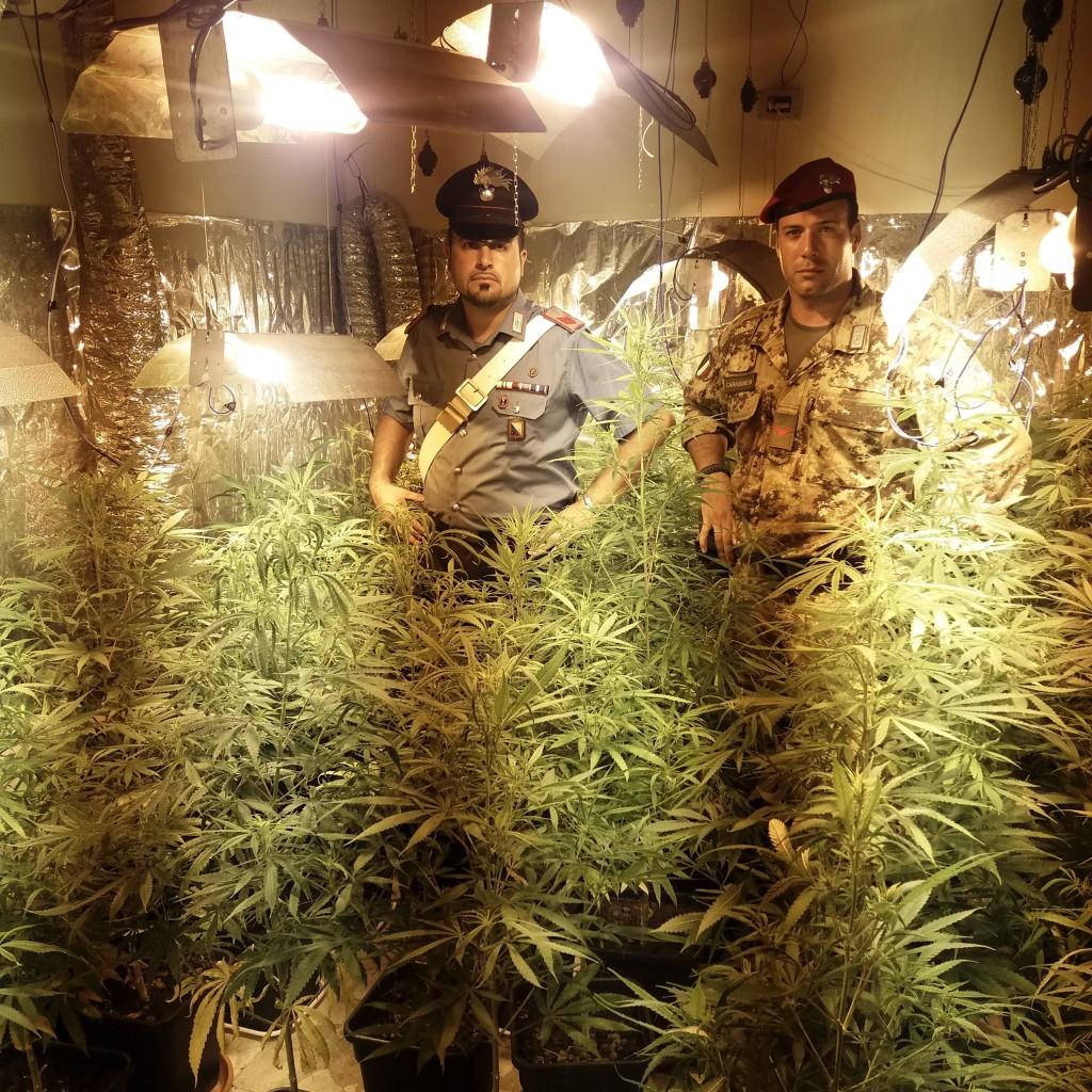 Mili San Pietro (Me): arrestato dai Carabinieri un uomo per coltivazione di piante di cannabis indica alte fino a 2 metri