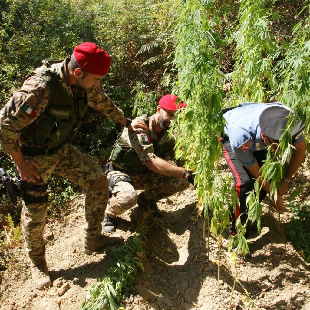 Scoperta piantagione di cannabis a Santa Lucia del Mela