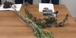 GUARDIA DI FINANZA – Lipari (Me): Sequestrate quattro piante di marijuana e trecentosettanta semi di canapa – Denunciati due soggetti all'Autorità Giudiziaria