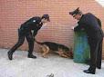Milazzo (ME); barcellonese arrestato dai Carabinieri con l'accusa di detenzione ai fini di spaccio di sostanze stupefacenti e possesso ingiustificato di munizionamento per arma da fuoco
