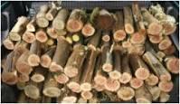 Operaio forestale sorpreso dai Carabinieri a fare legna in area demaniale