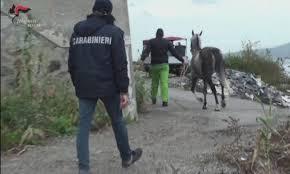 Messina: Operazione ZIKKA – Arresto FRANZINO