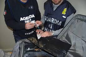"""GUARDIA DI FINANZA, ROMA: TRAFFICO INTERNAZIONALE DI DROGA: OPERAZIONE """"SPEED GOAL"""" , SEQUESTRATI OLTRE 16 CHILOGRAMMI DI COCAINA ALL'AEROPORTO DI FIUMICINO E ARRESTATI 6 RESPONSABILI"""