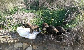 Caltanissetta. Abbandono di animali: 4 cagnolini salvati dalla Polfer