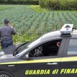 Barcellona P.G. (ME): illecita commercializzazione di quasi 500 tonnellate di falsi prodotti BIO, sottoposti a sequestro proventi illeciti per oltre 120.000 euro