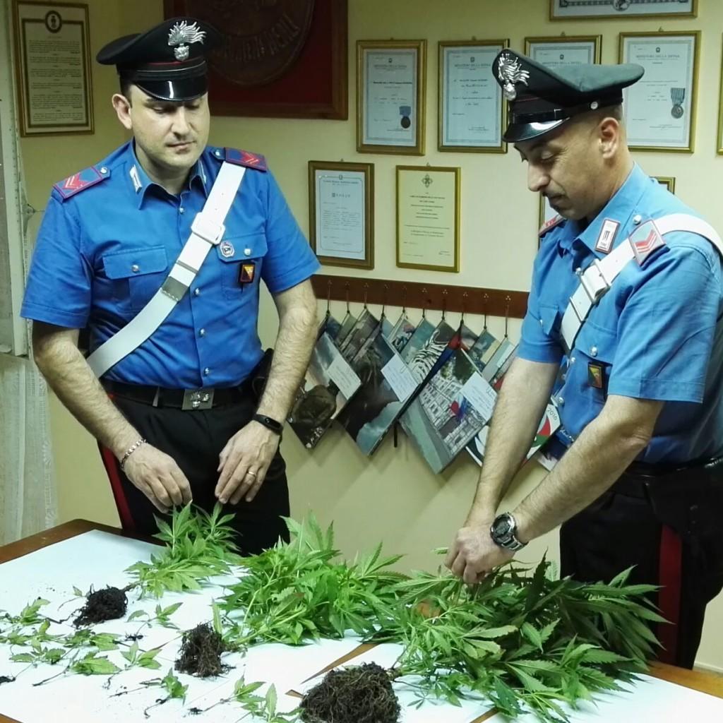 I Carabinieri della Stazione di Santa Lucia del Mela hanno arrestato un giovane del luogo per coltivazione di marijuana.  Trovate dai Carabinieri 25 piantine sul terrazzo dell'abitazione.