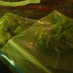 La Polizia di Stato di Ragusa arresta un pregiudicato per coltivazione in serra di marijuana. Sequestrati 6.500 kg di marijuana e l´intera area delle serre di 3.500 mq.