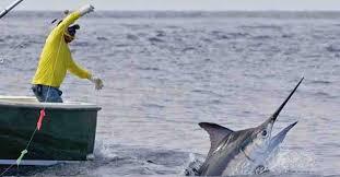 CAPITANERIA DI PORTO DI MILAZZO ORDINANZA N. 12/2018. Disciplina delle operazioni di sbarco e trasbordo di Pesce Spada (Xiphias Gladius) nel Circondario Marittimo di Milazzo