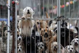 """Reggio Calabria. Operazione """"Happy Dog"""""""