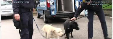 Benevento, vasta operazione antidroga della Polizia di Stato