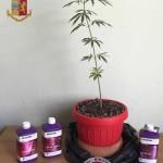 La Polizia di Stato denuncia giovane messinese: sfugge all'alt delle Volanti della Questura di Messina che lo intercettano poco dopo e gli sequestrano due piante di marjuana