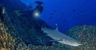 Francesca, l'amica degli squali. La 28enne biologa marina di Roma tra i primi esperti in Italia, si batte per la salvaguardia del predatore. Un sogno:studiare la cura del cancro con lo squalene