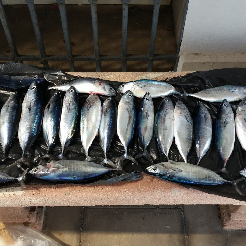 Pesca illegale, sequestrati dalla Guardia Costiera di Messina novellame di tonno rosso