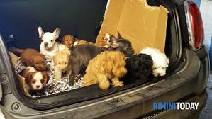 RIMINI, OPERAZIONE LUXURY DOG