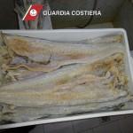 CAPITANERIA DI PORTO – GUARDIA COSTIERA M I L A Z Z O. Sequestrati 23 kg. di prodotto ittico adulterato