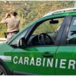 METAPONTO: Sequestrato elettrodotto dai Carabinieri Forestali di Scanzano Jonico