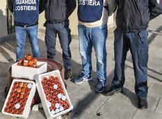 Polpa di riccio, la Guardia costiera di Messina ne sequestra 15 kg
