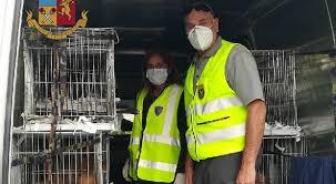 La Stradale ferma a Porpetto un furgone con dentro molti cuccioli di cane di varia razze sequestrati