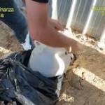 Catania, eseguite 9 misure cautelari per associazione a delinquere e altri reati vari